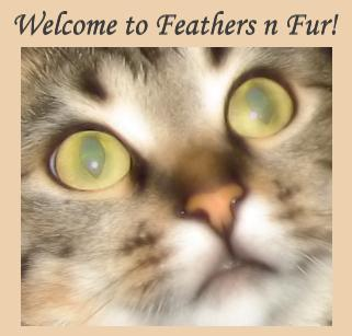 Welcome to Feathers n Fur!